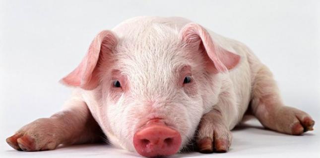 porc-contamin